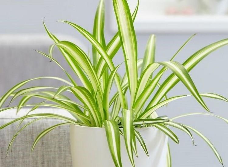 sancharbel-departamento-decoracion-plantas-arana
