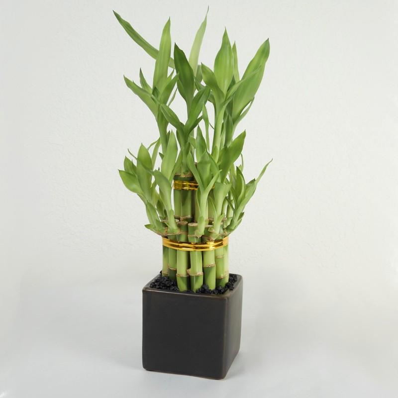 sancharbel-departamento-decoracion-plantas-bambu