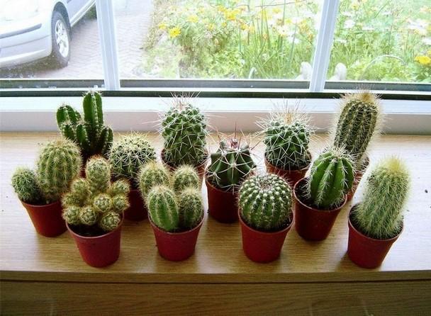 sancharbel-departamento-decoracion-plantas-cactus