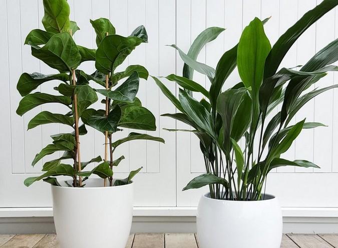 sancharbel-departamento-decoracion-plantas-hierro