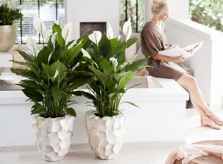 sancharbel-departamento-decoracion-plantas-lirio-paz