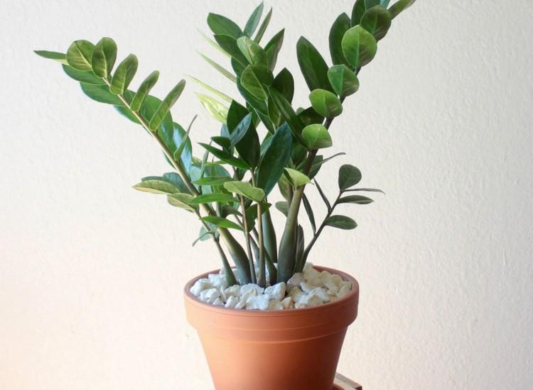 sancharbel-departamento-decoracion-plantas-zamioculca